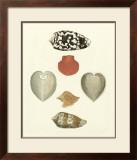 Knorr Shells III Prints by George Wolfgang Knorr