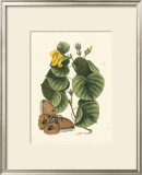 Butterfly and Botanical I Art by Mark Catesby