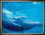 Humpback Mother and Calf Framed Giclee Print by Michael S. Nolan