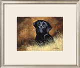 Black Labrador Limited Edition Framed Print by Richard Britton