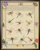 Dragonfly Manuscript II Posters by Jaggu Prasad