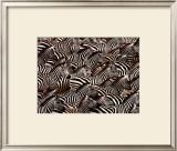 Zebras, Kenya Posters by Art Wofe