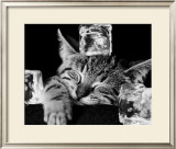 Kool Kat II Prints by David Mcenery
