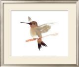 Hummingbird Art by Aurore De La Morinerie