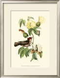 Exotic Birds I Poster by Georges Cuvier