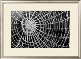 Spider Web Sparkle Prints by  erichan