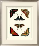 Butterflies II Posters by Pieter Cramer