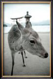 The Deer of Itsukushima Art by Takashi Kirita