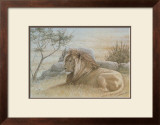 Golden Lion Prints by Dennis Curry