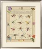 Dragonfly Manuscript II Poster by Jaggu Prasad