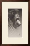 Jojo, the Orangutan Prints by  Caldwell