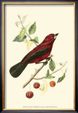 Exotic Birds V Posters by Georges Cuvier