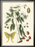 Butterfly and Botanical III Prints by Mark Catesby