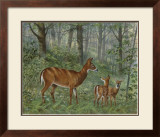 Deer Family I Prints by Ron Jenkins