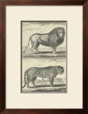 Lion and Tiger Art by Denis Diderot