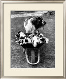 Tich and Pups Getting Around Prints