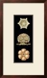 Kaleidoscope Anemone III Posters