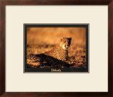 Guepard Print by Georges Bosio