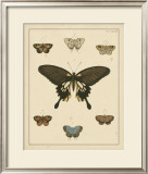 Heirloom Butterflies I Posters by Pieter Cramer