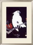 Ukiyo-e Parrot Art by Ohara Shoson