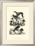 International Show Dogs II, c.1863 Prints by Harrison Weir