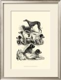International Show Dogs II, c.1863 Prints by Harrison Weir