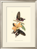 Butterflies and Flora II Prints by John Westwood