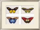 Rain Forest Butterflies Prints by Robert British