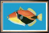 Humuhumu Engraving Posters by Steve Strickland