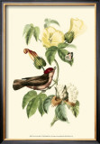 Exotic Birds I Posters by Georges Cuvier