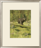 Black Bear Print by Oliver Kemp