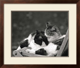 Little Nap in the Sun Prints by Maurice Subervie
