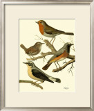 Domestic Bird Family III Posters by W. Rutledge