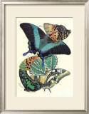 Butterflies III Poster by E. A. Seguy