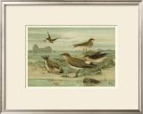 Shore Gathering V Print by Franz Eugen Kohler
