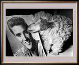 Toy Poodle Kisses Elvis Posters