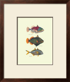 Tropical Fish Art by J. W. Bennet & Couvier
