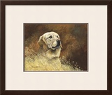 Golden Labrador Limited Edition Framed Print by Richard Britton