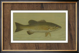 Small-Mouthed Black Bass Art by  Harris