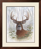 Deer Buck Portrait Prints by Ron Jenkins