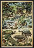 Reptiles Prints