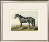 Cassell's Horse II Posters by  Cassell