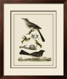 Bird Family V Print by A. Lawson