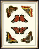 Butterflies I Poster by Pieter Cramer