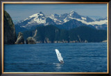 Alaska Passage Humpback Fin Framed Giclee Print by Charles Glover