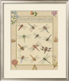 Dragonfly Manuscript I Prints by Jaggu Prasad