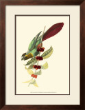 Exotic Birds IV Prints by Georges Cuvier