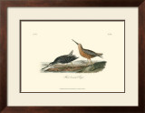Red-Breasted Snipe Posters by John James Audubon