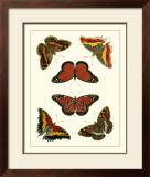 Butterflies I Prints by Pieter Cramer