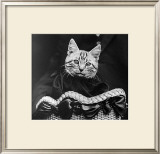 French Tabby Cat Art by Mesh Gabriella